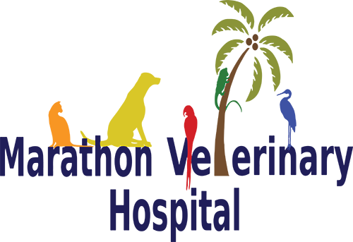 Marathon Veterinary Hospital